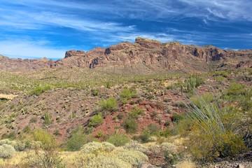 Saguara national park, Arizona