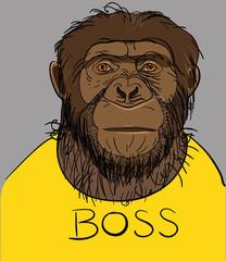 серьезные обезьяны