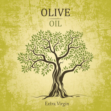 olive tree. Olive oil.Vector  olive tree. For labels, pack.