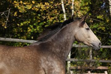 Beautiful horse running on pasturage in autumn