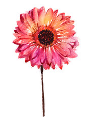 Watercolor flower gerbera