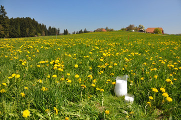 Jug of milk on the meadow