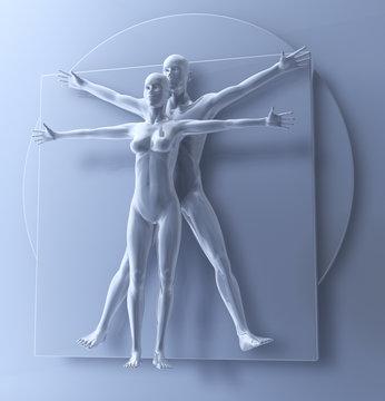 Leonardo Da Vinci Vetruvianischer Mann, Frau