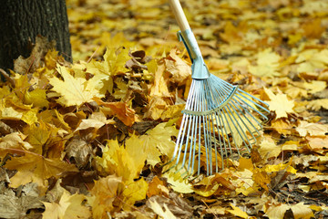 Cleaning of autumn leaves in park