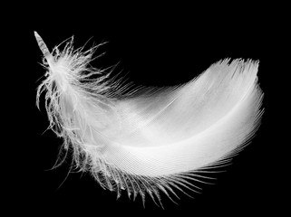 Feather, isolated on the black background.