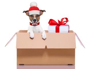 winter christmas dog