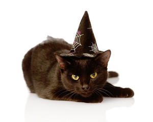 Black Cat with witch hat for halloween. isolated on white