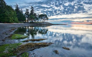 Fototapete - Coast at Sunrise with Trees Reflected