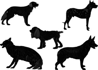 five black isolated dogs