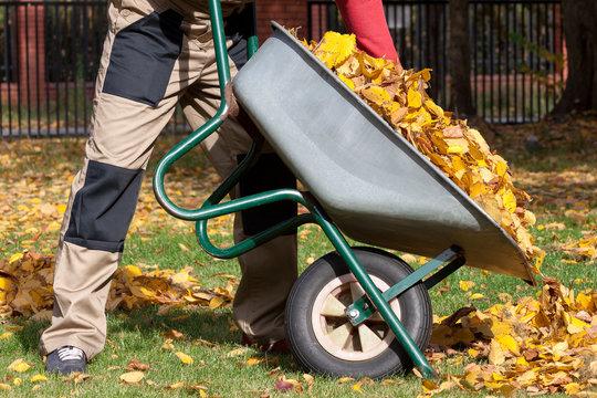 Autumn cleanning in the garden