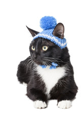 black cat in a winter hat isolated on white background