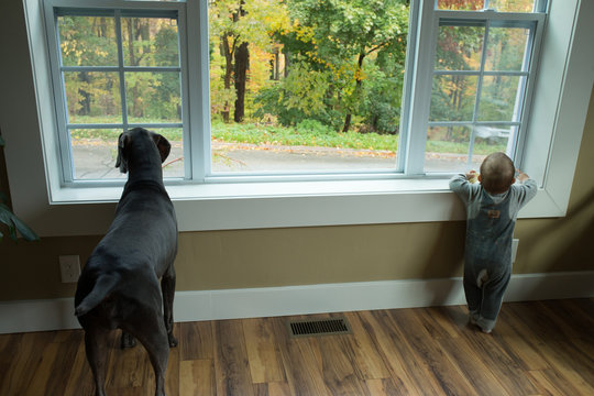 dog and child kid baby looking out window fall color