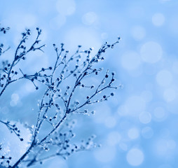 The plants covered with frost. Winter floral background.