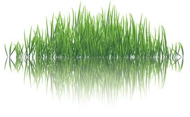 reflective grass