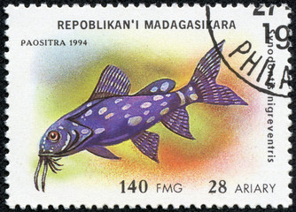 stamp printed in Madagascar shows synodontis nigreventris