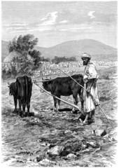 Arabian Fellah - Paysan Arabe