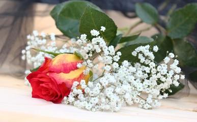 rose mit trauerflor