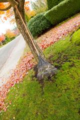 Fan Rake leaning on Maple Tree during Autumn Season