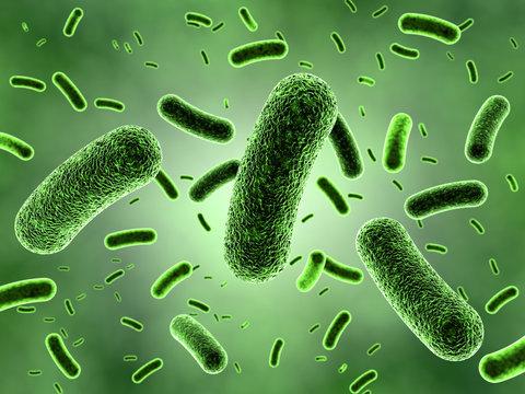 Green Bacteria Colony