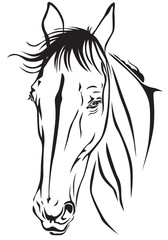 Horses muzzle