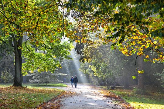 Path in the autumn park. Autumn Landscape. Park in Autumn.