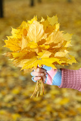 Wall Mural - Bouquet of yellow leaves in hand