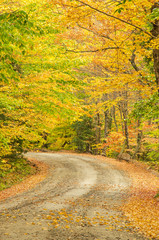 Colourful Trees on a Curving Country Road in Autumn
