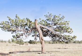 illusion walking tree