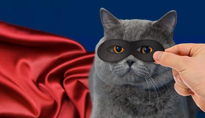 Papier Peint - super-hero cat