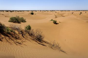 Sand dunes, Hamada du Draa, Morocco.