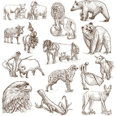 Animals around the World (set no. 4) - full sized drawings