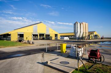 Modern milk production farm