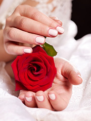 Female hand with rose bouquet