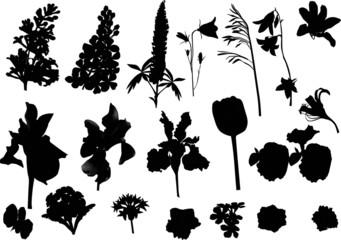 twenty one isolated flower silhouettes