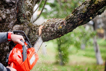 man cutting trees using an electrical professional chainsaw