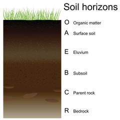 Vector illustration of soil horizons (layers)