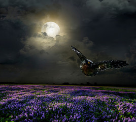 Poster Full moon Lavender field in the moonlight