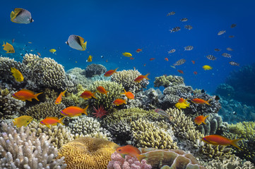 Aluminium Prints Under water coral reef fishes in the water