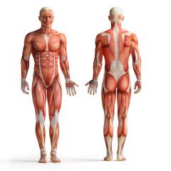 human anatomy view