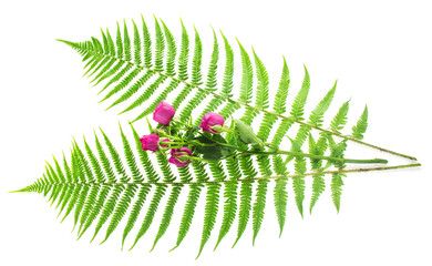 Leaves of a fern and branch the roses