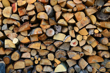 Wall Mural - Texture of wooden logs