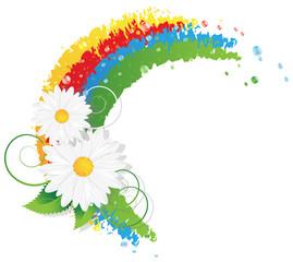 Chamomiles and rainbow