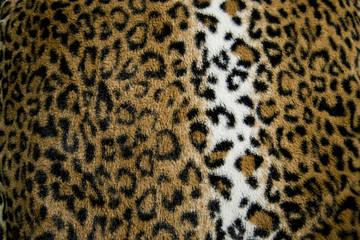 Beautiful leopard print fur / fabric