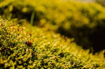 Beautiful ladybug sitting on fresh green moss