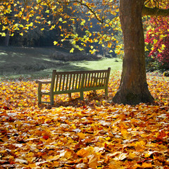 Fototapete - Bench in autumn park.
