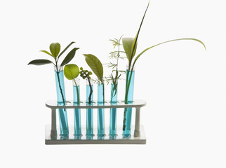 Close-up of test tubes with plants