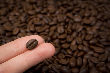 Coffee seed on fingers