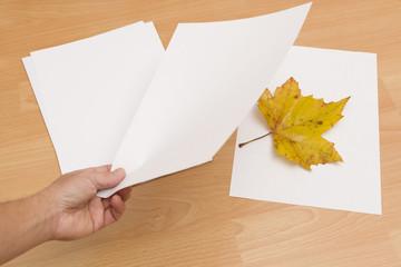 Blatt zwischen Papier legen - Haltbarkeit erhöhen