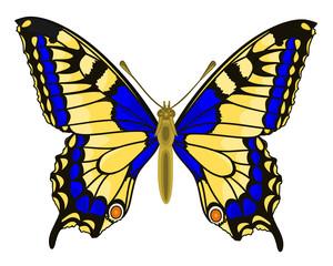 Butterfly Papilio machaon Linnaeus