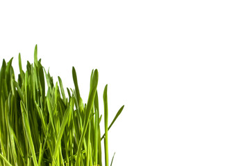Grass on an isolated background